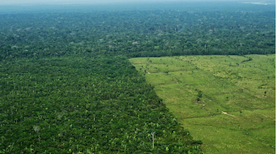 Aerial shot of Amazon rainforest with large clearcut section area on right half.